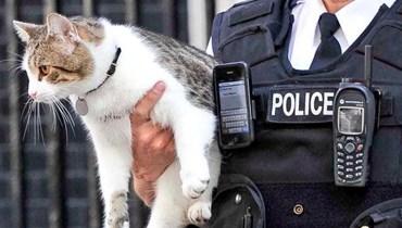 بالفيديو: قط يهرب المخدرات في سجون بنما
