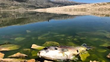 مصلحة الليطاني: لمنع صيد الأسماك من بحيرة القرعون وأخذ العينات اللازمة من أنسجة الأسماك الحية والنافقة.