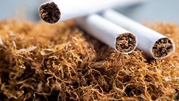 انطلاقة عرجاء لزراعة التبغ، والأكلاف بالدولار... هل سيرتفع ثمن علبة السجائر؟