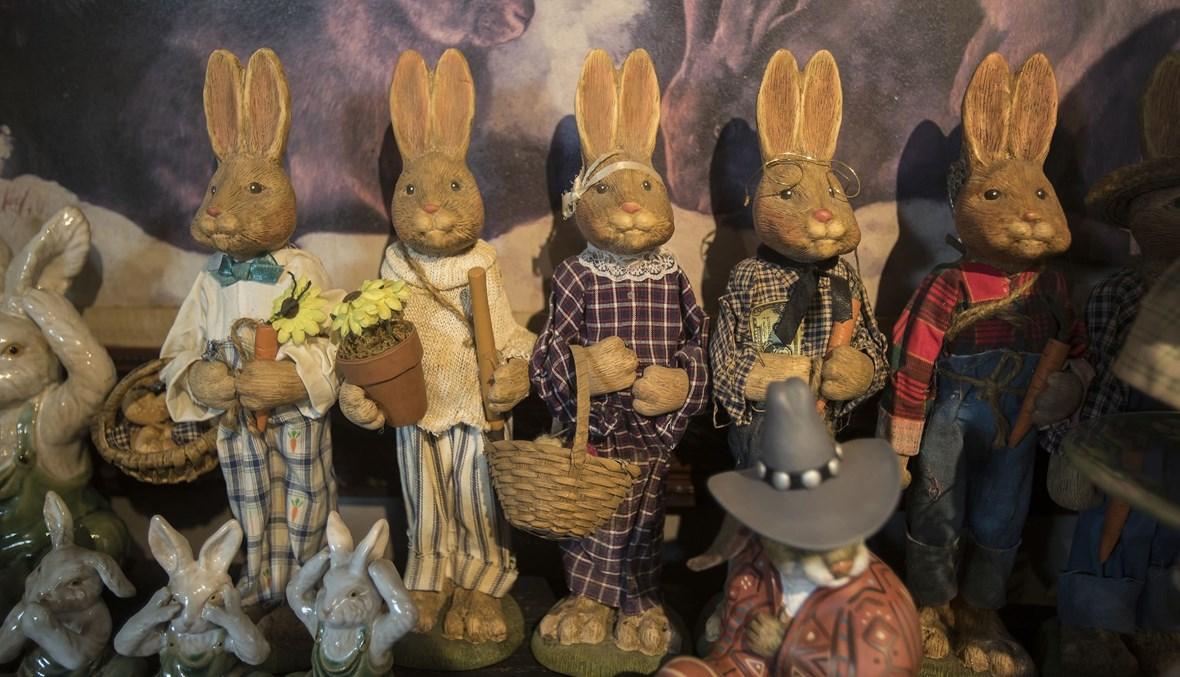 متحف الأرنب