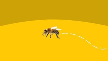 بهذه الطريقة اشتركت 60 ألف نحلة على قتل رجل!