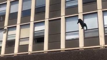قطة تقفز من الطبقة الخامسة بعد اندلاع حريق... وهذا ما جرى (فيديو)