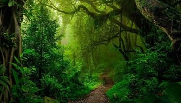 صورة للطبيعة