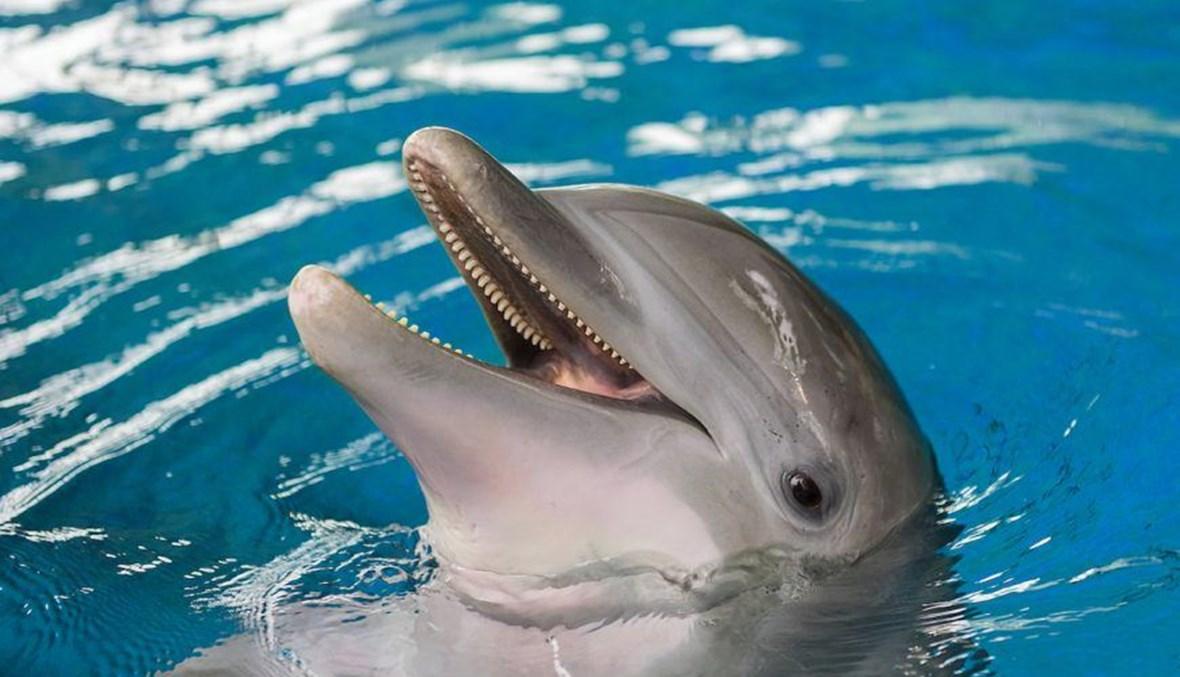 دلفين.