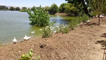 بحيرة تعنايل (تصوير فرج عبجي)