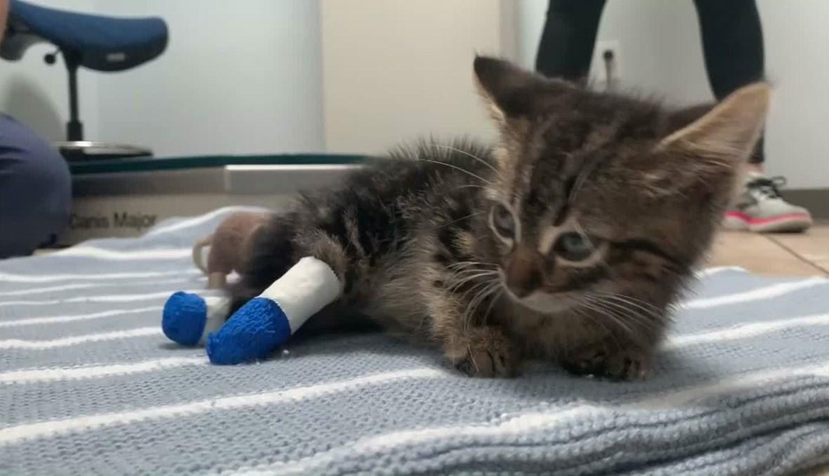 صورة لصغير قط