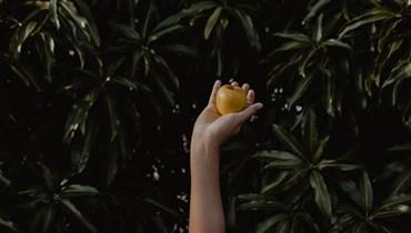 ما بين الفنة والفنة قد أزهر تفاح الجنة
