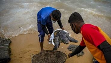 انجراف نحو 200 سلحفاة ودولفين نافق على شاطئ في سري لانكا (أ ف ب).