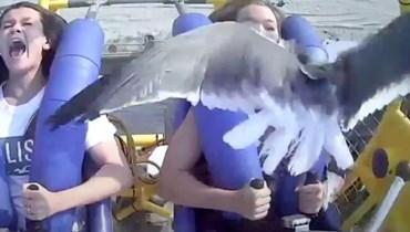"""بالفيديو- """"لحظة أشبه بكابوس""""... طائر نورس يصطدم بوجه فتاة في المنتزه"""