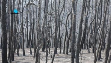 مشاهد تُدمي القلوب من حريق القبيات... خسائر فادحة في الثروة الحرجية وأشجار الصنوبر (صور)