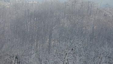 """""""النهار"""" عاينت خسائر الحرائق... حرج القبيات يتحوّل لمقبرة أشجار وقلبُ الأهالي يَعصُر (صور وفيديو)"""