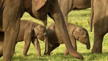 صور ة قطيع من الفيلة