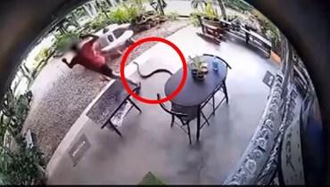 مقطع من الفيديو لهجوم الأفعى.