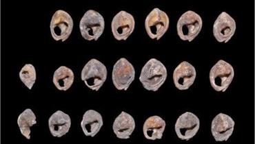 أصداف بحرية تعود إلى 150 ألف سنة... اكتشاف أقدم حُلي استعملها الإنسان في المغرب (صور)