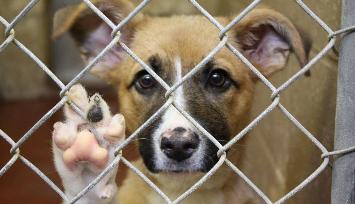 كلب في ملجأ للحيوانات الأليفة (تعبيرية).