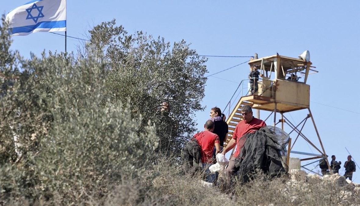 قطاف الزيتون في فلسطين المحتلة (أ ف ب).