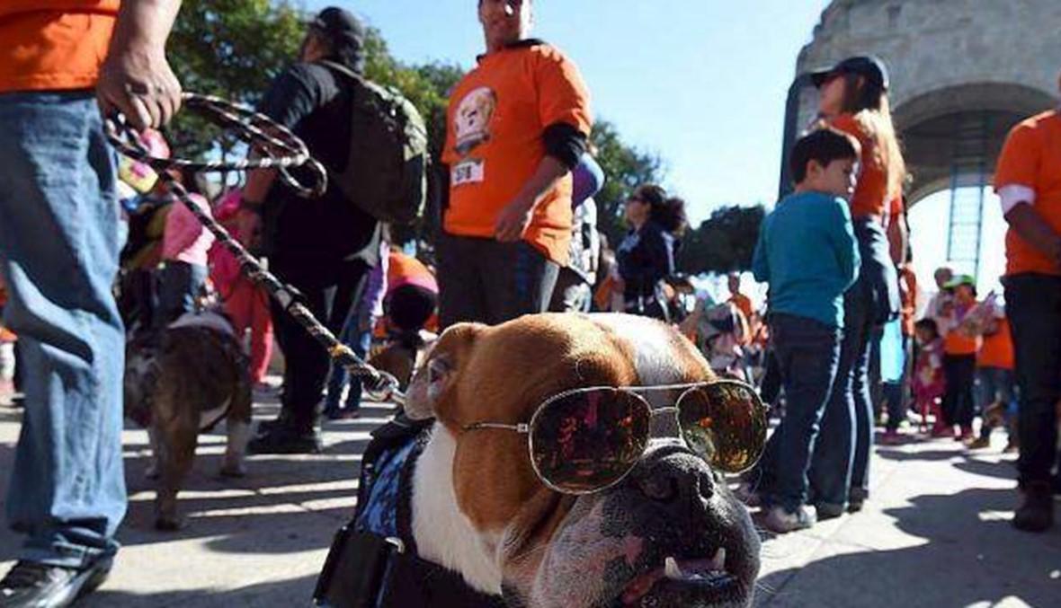"""950 كلباً في شوارع مكسيكو... الهدف دخول """"غينيس"""""""