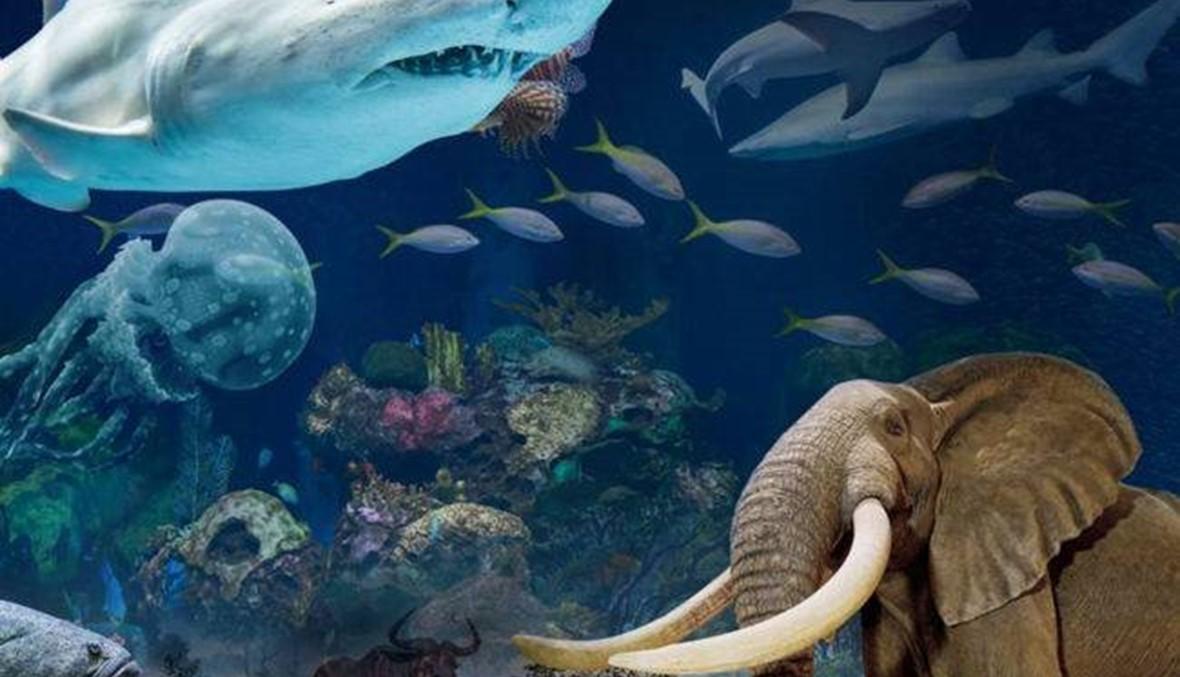 """بالفيديو والصور- نظرة داخل """"Wonders of Wildlife"""" الخيالي: أهم متحف وحوض أسماك في العالم!"""