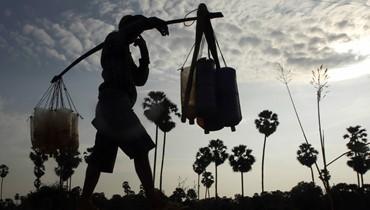 إنتاج سكّر النخيل في كمبوديا (أ ب).