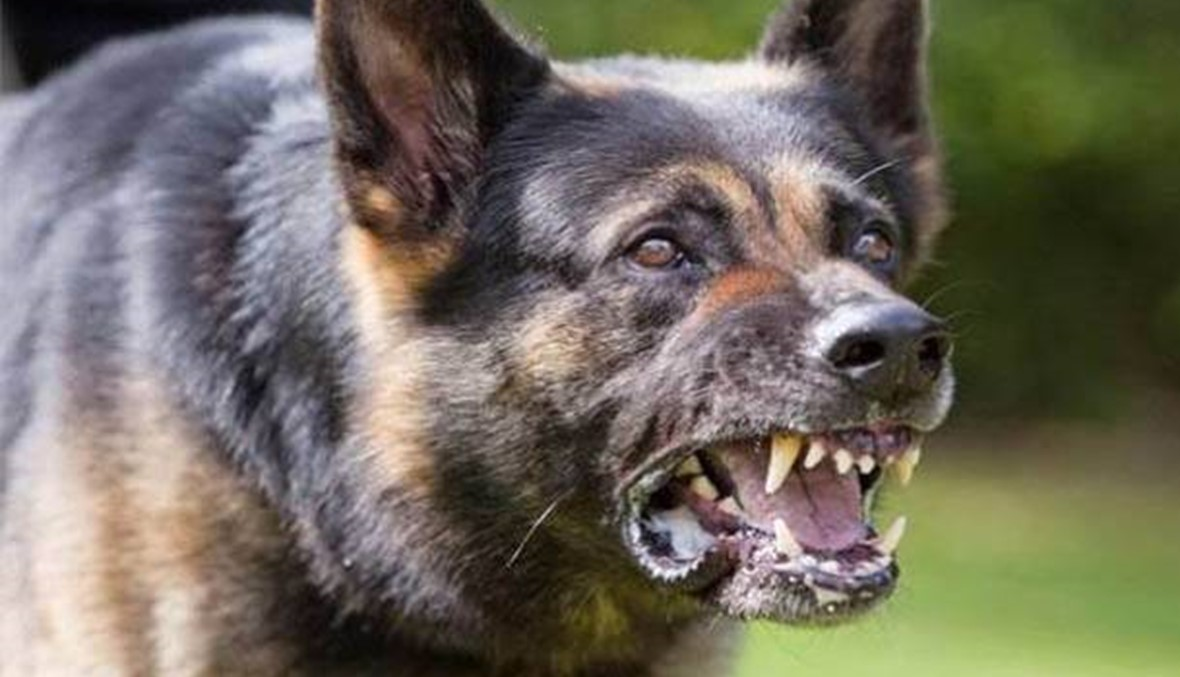 """ظاهرة الكلاب الشاردة في النبطية... هل تتكرّر """"مجزرة الغبيري""""؟"""