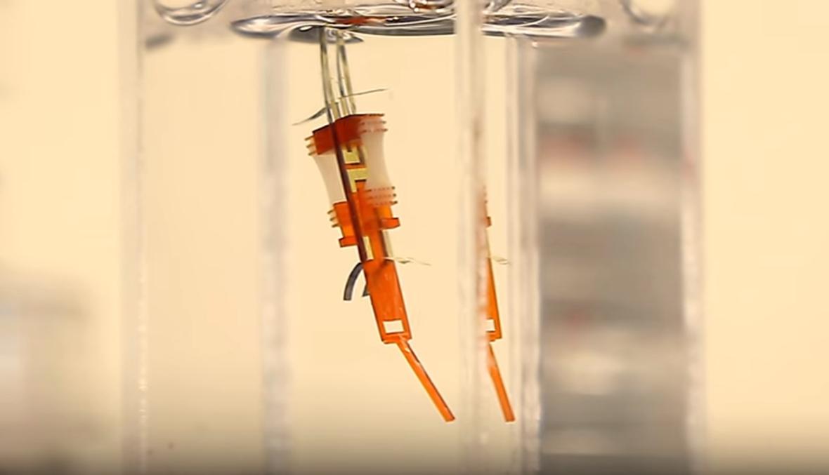( بالفيديو) روبوت على هيئة إصبع مصنوع من بلاستيك ومعادن... وأنسجة حية!