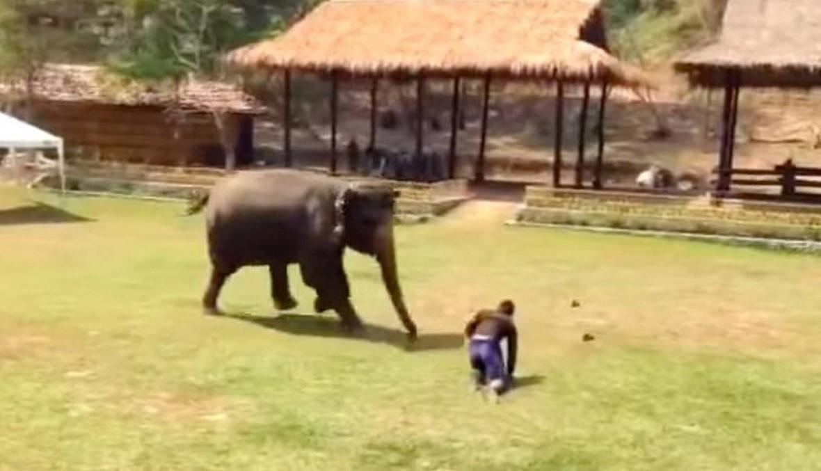 كيف دافع هذا الفيل عن صديقه الذي يُضرب؟