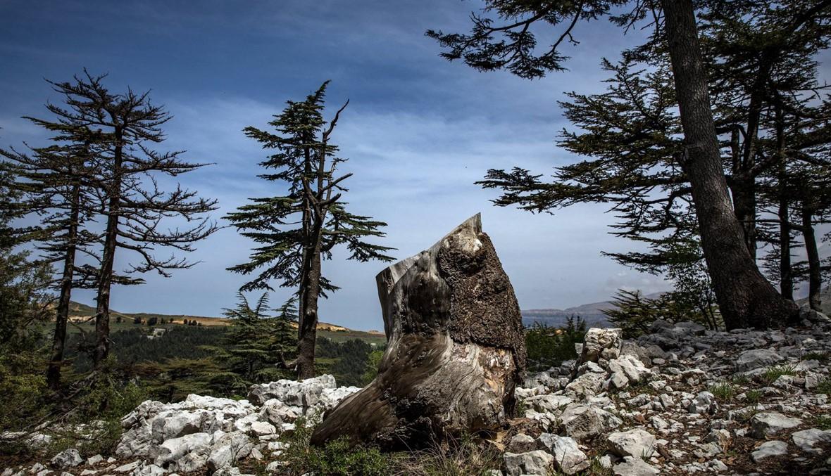 التغيّر المناخي في لبنان... لم يفت الأوان بعد
