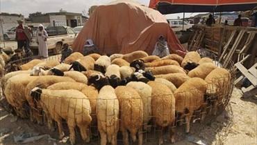 جدل في السعودية بسبب فتاوى ذبح الاضاحي في العيد!