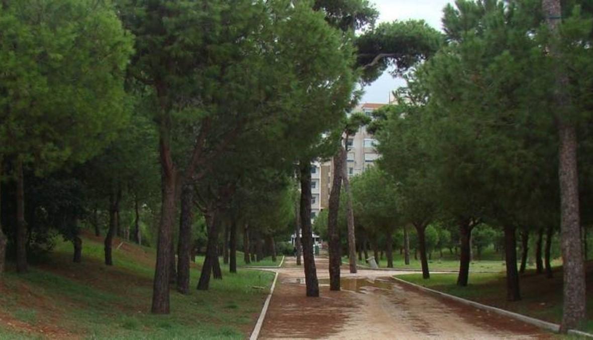 التعدّيات على حرج بيروت تابع... قطع أشجار لإقامة مبانٍ غير شرعيّة