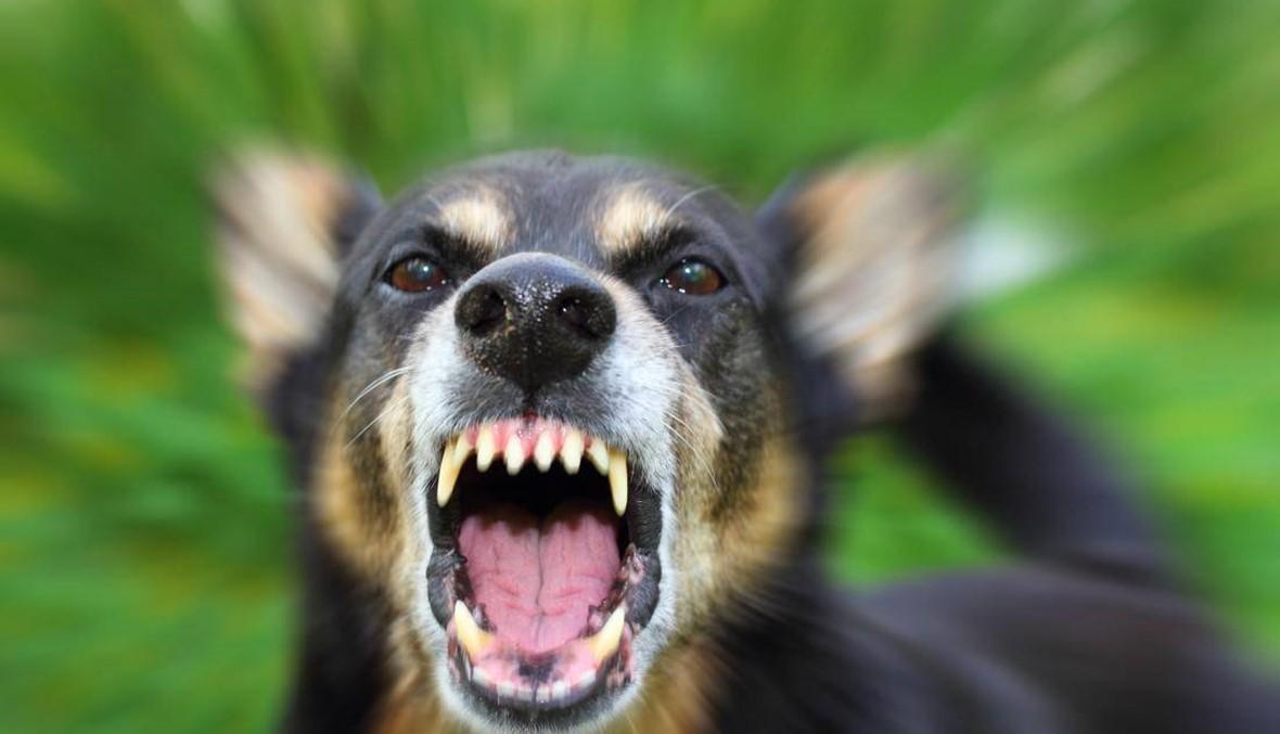 """إسرائيل تُرسِل كلاباً شرسة إلى قرى الجنوب؟ احذروا اختراع الـ""""نيكلوتينيا""""!"""