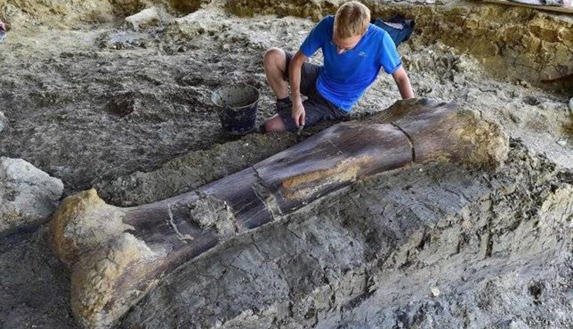"""العثور على عظم ديناصور ضخم في فرنسا...""""اكتشاف كبير"""""""