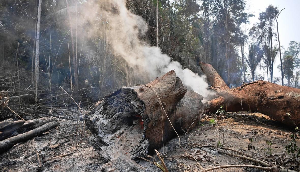 """""""سببان أساسيّان"""" وراء حرائق الأمازون: تربية البقر، وزراعة الصويا"""