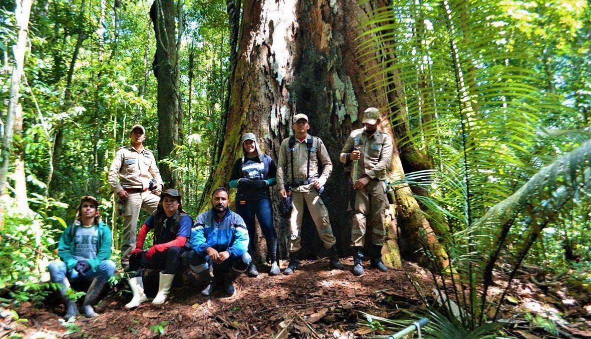 """ارتفاعها 88 متراً... """"أطول شجرة"""" في الأمازون بخير"""