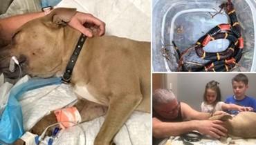 """كلب قدّم حياته لينقذ طفلَي مالكه من ثعبان سامّ... """"أدين له بحياة ولدَي"""""""