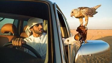كيف يختار مربّو الصقور في السعودية أسماء طيورهم