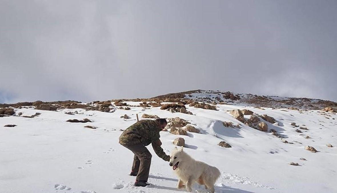 سماكة الثلج أكثر من 5 سنتيمرات... القرنة السوداء تلبس الأبيض رداء جديداً (صور)