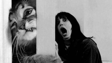 لماذا تخاف الفتيات تحديداً من القطط؟