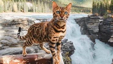 قطط الإنستاغرام... حسابات أظرف القطط حول العالم!
