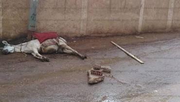 مصري يقاضي مؤسسة حكومية تسببت بموت حمار!