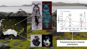 جزئيات بلاستيكية في أنتاركتيكا تنتشر في السلسلة الغذائية البرية وتلوّث النظام البيئي