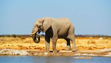 بوتسوانا تحقّق في سبب نفوق 275 فيلاً في شكل غامض