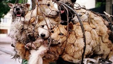 أول مقاطعة في كمبوديا تحظر أكل لحوم الكلاب... عقوبات بالسجن وغرامات