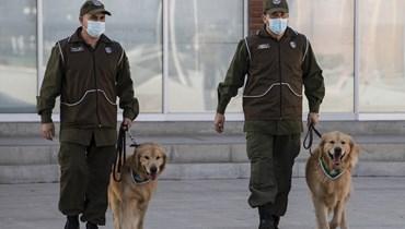 تشيلي تدرّب الكلاب لتتبّع المصابين بكورونا عبر التعرّق (صور)