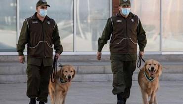 تشيلي تدرب الكلاب للتعرف على المصابين بفيروس كورونا