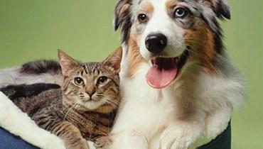 """العثور على أجسام مضادة لـ """"كورونا"""" لدى الكلاب والقطط!"""