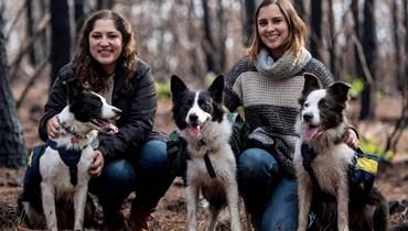 إعادة الحياة البرّية... كلاب تزرع غابات تشيلي المحترقة