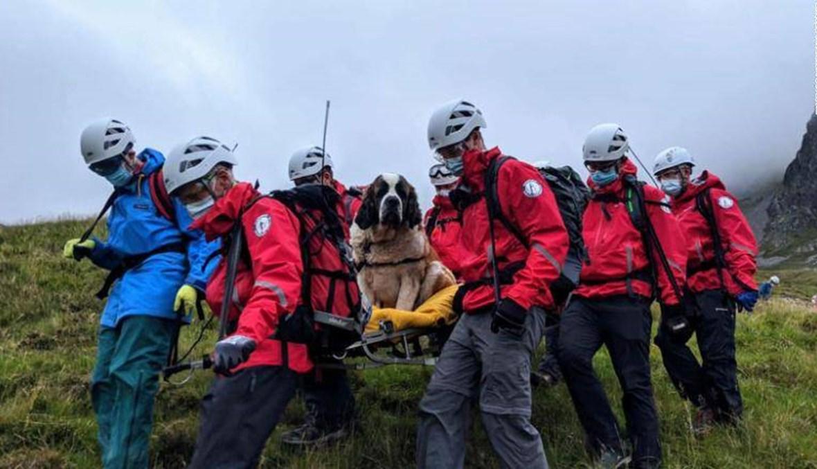 انقلبت الأدوار... إنقاذ كلب سان برنارد سقط من أعلى قمّة في إنكلترا