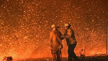 """""""أسوأ كوارث الحياة البرية في التاريخ الحديث""""... مليارات الحيوانات ضحية حرائق أوستراليا"""