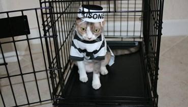 فرار قطة من السجن بعد إلقاء القبض عليها بتهمة تهريب المخدرات