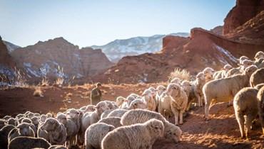 اعتصام لأصحاب مزارع الماشية في النبطية مطالبين القضاء بالتراجع عن قرار إقفالها
